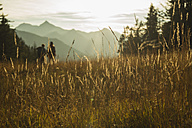 Austria, Tyrol, Tannheimer Tal, tall grass in sunlight on alpine meadow - UUF002141