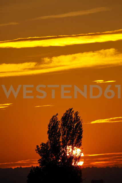 Germany, Autum sun in the evening - JTF000588