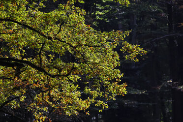 Germany, Beginning of autumn in forest - JTF000583
