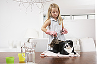 Girl at home cleaning cat on dining table - FSF000283