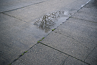 Puddle on paving slab with reflection of bare tree - MYF000580