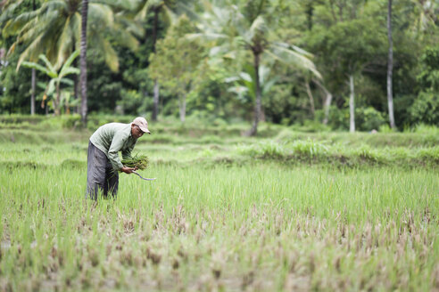 Indonesia, Lombok, man working in field - NNF000061