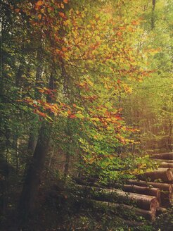 Germany, Bavaria, Hiking trail in autumnal forest between Herrsching and Andechs - GSF000895