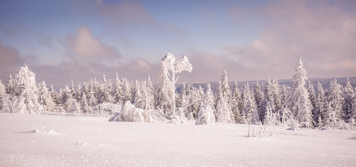 Germany, Baden-Wuerttemberg, Black Forest, snow-covered trees at Schliffkopf - PUF000115