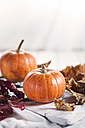 Two miniature pumpkins, Cucurbita pepo, and autumn leaves in front of white background - SBDF001379