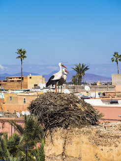 Africa, Morocco, Marrakesh, El Badi Palace, White storks, Ciconia ciconia, in nest - AMF003122