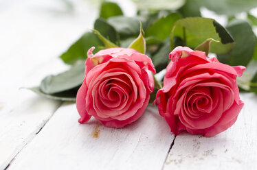 Two rose blossoms on white wood - ODF000849
