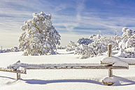 Germany, Baden-Wuerttemberg, Black Forrest, snow-covered landscape in sunlight - PUF000183