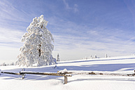 Germany, Baden-Wuerttemberg, Black Forrest, snow-covered fir tree at sunlight - PUF000184