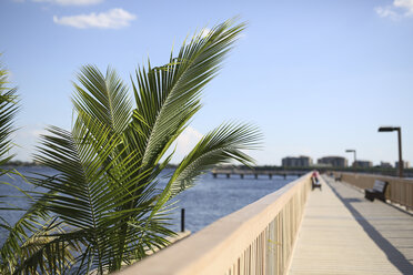 USA, Florida, Cape Coral, palm tree at pier - SHKF000022