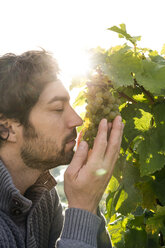 Germany, Bavaria, Volkach, winegrower smelling at grapes - FKF000772