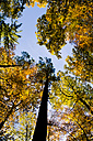 Germany, Baden-Wuerttemberg, Nature Park Schoenbuch, Trees in autumn - LVF002192