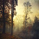 Germany, near Wuppertal, deciduous forest in autumn at sunset - DWI000294