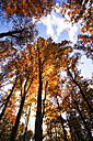 Germany, Saxony, Forest in autum - JTF000593