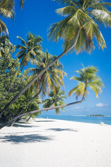 Maldives, Ari Atoll, view to palms and white sandy beach - FLF000581