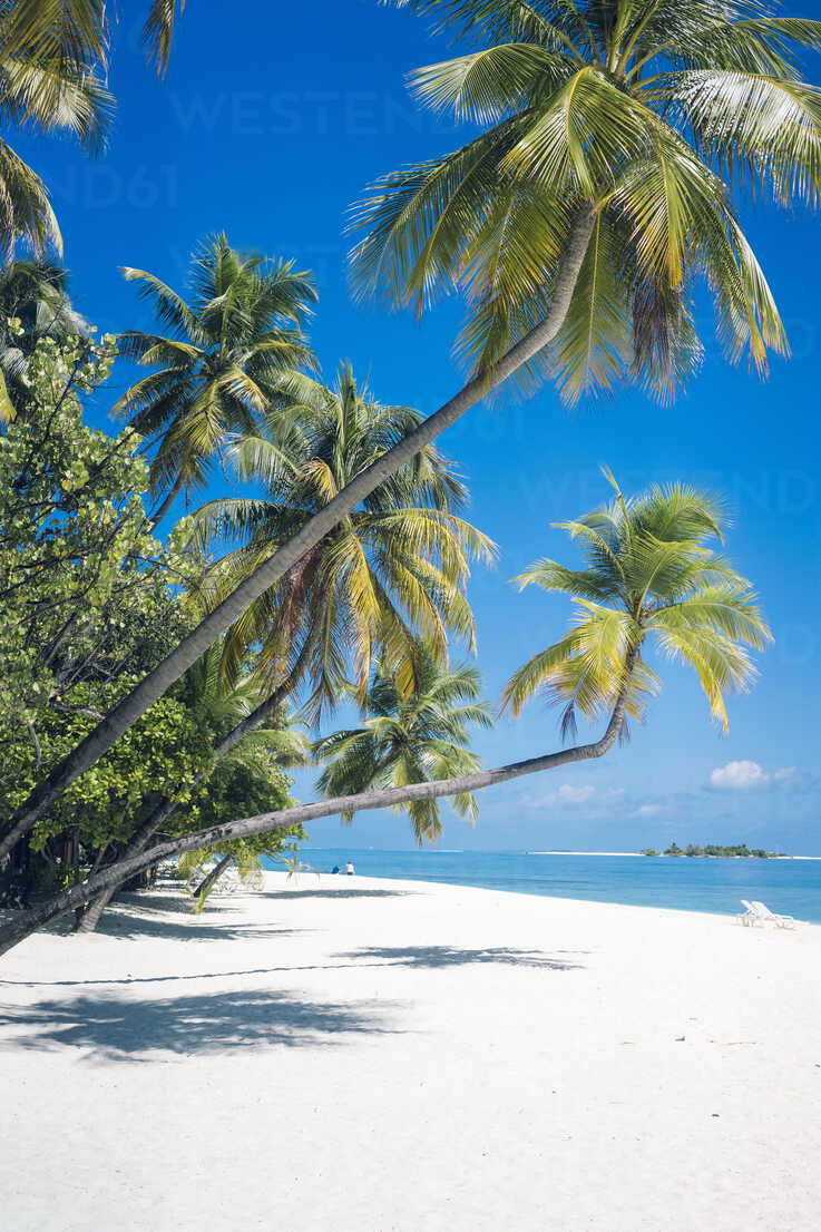 Maldives, Ari Atoll, view to palms and white sandy beach - FLF000581 - Florian Löbermann/Westend61