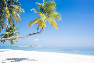 Maldives, Ari Atoll, view to palms and white sandy beach - FLF000582