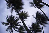 Maldives, Ari Atoll, view to palm trees in storm - FLF000585