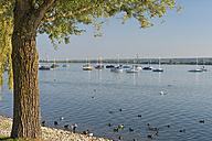 Germany, Baden-Wuerttemberg, Lake Constance, sailboats and Reichenau island seen from Allensbach - SHF001672