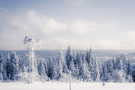 Germany, Baden-Wuerttemberg, winter landscape at Black forest - PUF000328
