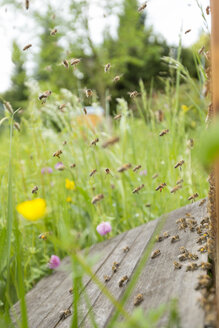 Germany, Baden-Wuerttemberg, Ueberlingen, bee swarm at bee box - SHF001688