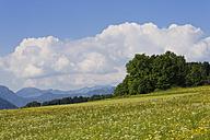 Germany, Bavaria, Samerberg, flower meadow - SIEF006298