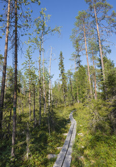 Finland, Lapland, Kuusamo, Oulanka National Park, pine forest with boardwalk - JBF000177