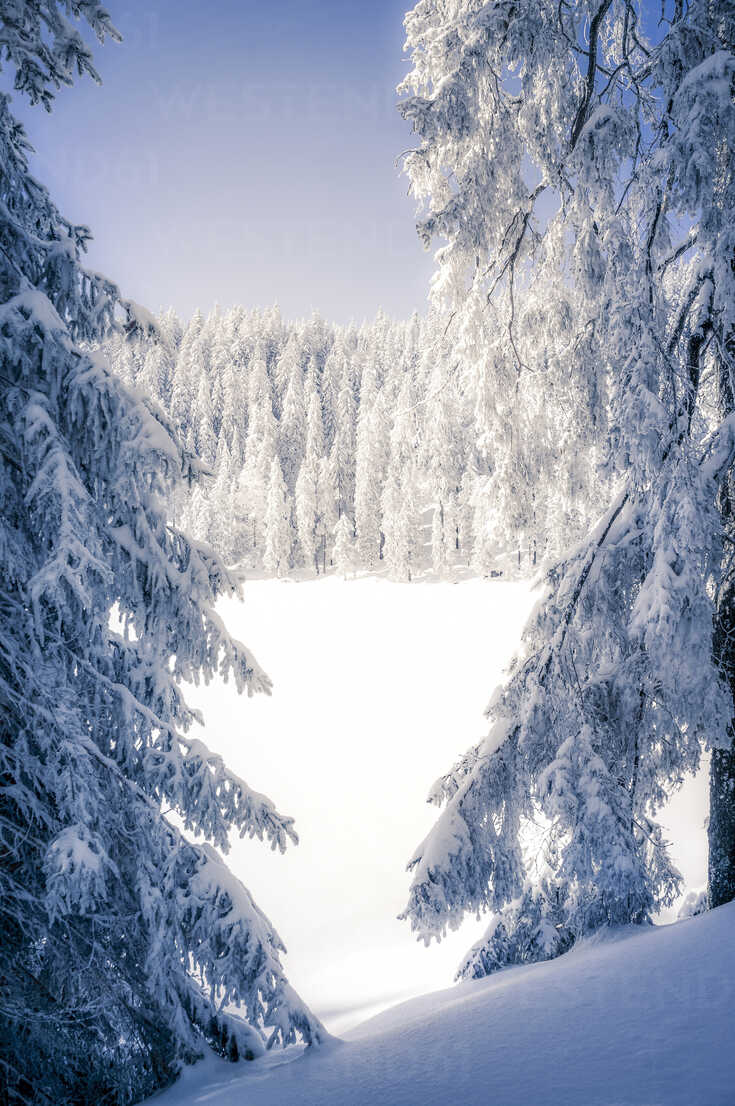 Germany, Baden-Wuerttemberg, Black Forest, snow-covered landscape - PUF000332 - pure.passion.photography/Westend61