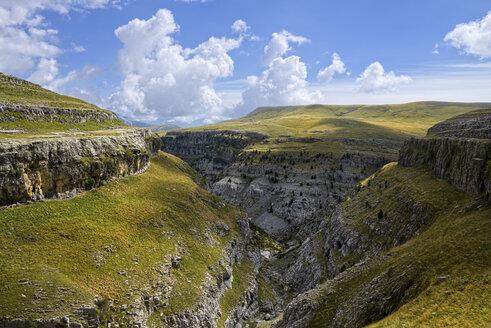 Sapin, Aragon, Pyrenees, Ordesa y Monte Perdido National Park, Canon de Anisclo - LAF001250