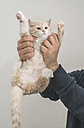 Man's hands holding house cat - DEGF000094