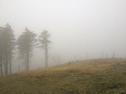 trees in mist - HCF000098