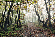 Germany, Rhineland-Palatinate, Boppard-Weiler, autumnal forest in the fog - DWF000211