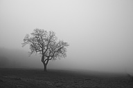 Belgium, High Fens, view to bared tree in the fog - HLF000812