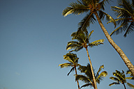 USA, Hawaii, view to palm trees in front of blue sky - STKF001097
