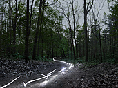 Light trails in a forest at evening twilight - STKF001081