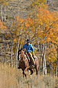 USA, Wyoming, Big Horn Mountains, riding cowboy in autumn - RUEF001329