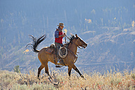 USA, Wyoming, Big Horn Mountains, riding cowboy in autumn - RUEF001305