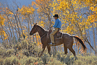 USA, Wyoming, Big Horn Mountains, riding cowboy in autumn - RUEF001332