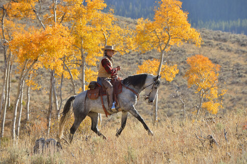 USA, Wyoming, Big Horn Mountains, riding cowboy in autumn - RUEF001334