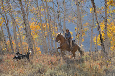 USA, Wyoming, Big Horn Mountains, riding cowgirl in autumn - RUEF001318
