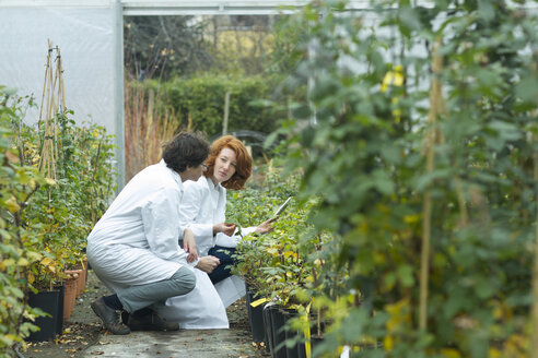 Two female scientists controlling plants in a greenhouse - SGF001216