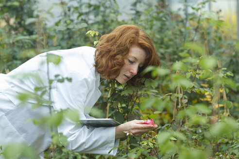 Female scientist controlling plants in a greenhouse - SGF001219