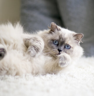 Portrait of longhair cat with blue eyes lying on a carpet - NNF000070