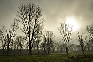 Germany, North Rhine-Westphalia, Neuss, mystical atmosphere at nature reserve - GUFF000074