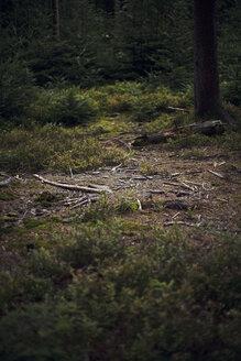 Germany, Baden-Wuerttemberg, Bad Herrenalb, forest - DW000226