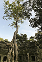 Cambodia, tree overgrowing wall in Ta Prohm temple complex - FCF000563