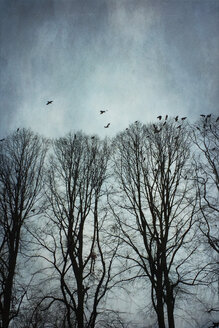 Germany, Wuppertal, bare trees and crows - DWI000343