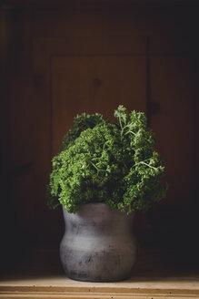 Bunch of parsley on wooden shelf - ECF001648