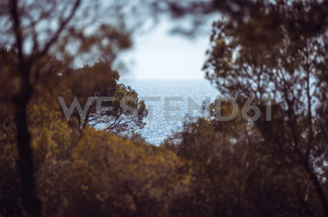 Spain, Balearic Islands, Menorca, Cala Galdana, view of a bay among trees - EHF000016