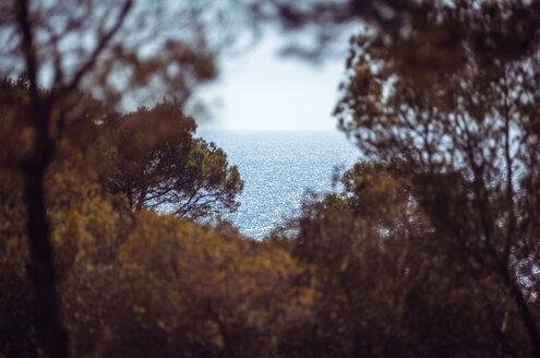 Spain, Balearic Islands, Menorca, Cala Galdana, view of a bay among trees - EHF000016